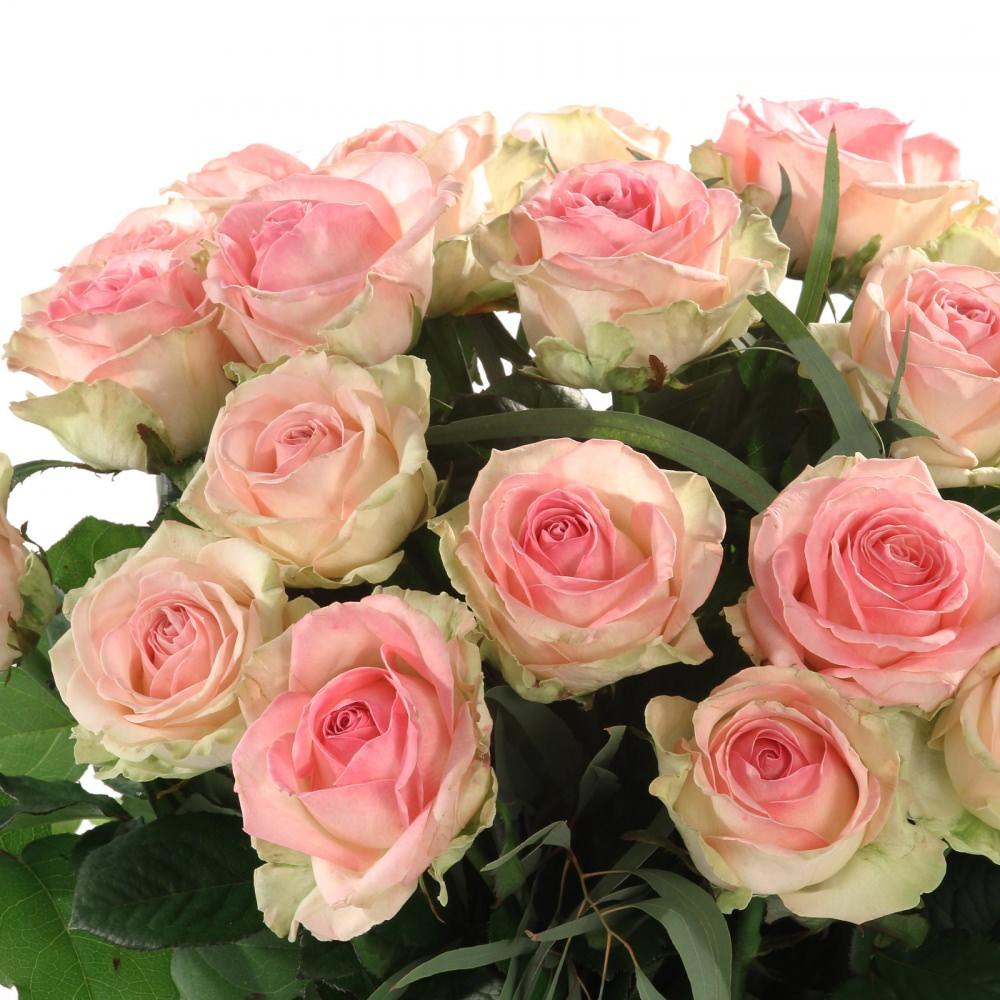 grootbloemige roos